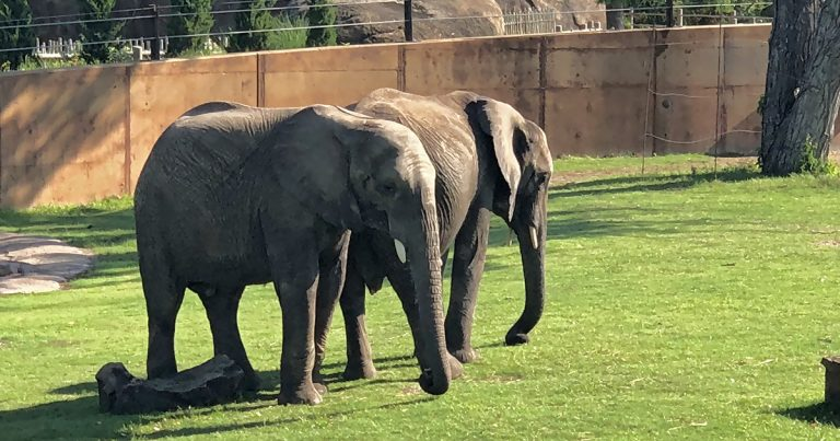 Sedgwick County Zoo Elephants